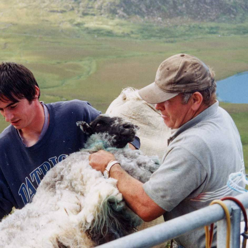 Irish Shepards with their sheep